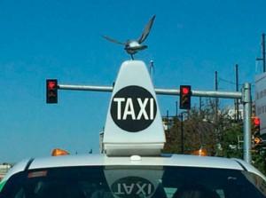 Все о такси - фото дня 11 июня
